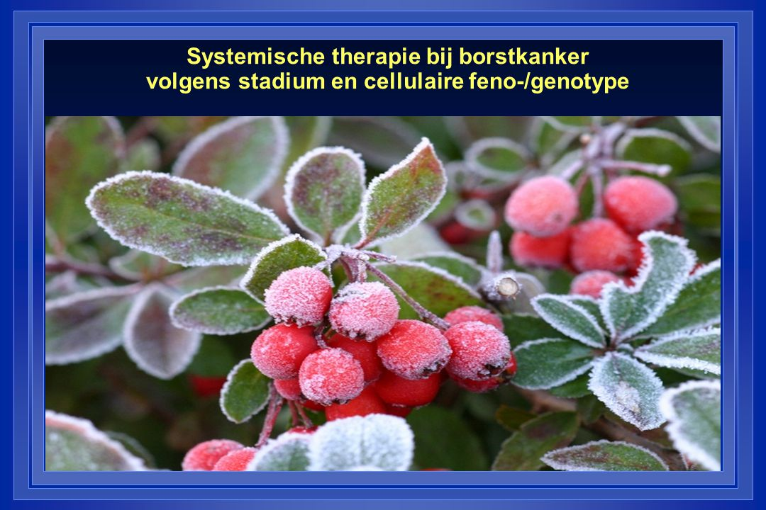 Chemotherapie bij borstkanker - CMF: Cyclofosfamide, methotrexaat, 5-FU - Anthracyclines: adriamycine, epirubicine (of CAF-FEC) Liposomal doxo (Caelyx®, Myocet®) - Taxanes: taxotere®, taxol® - Xeloda® (Capecitabine) - Navelbine® (Vinorelbine) - Mitomycine ® - Gemcitabine ® - Herceptin® (trastuzumab) - Lapatinib® - Avastin®