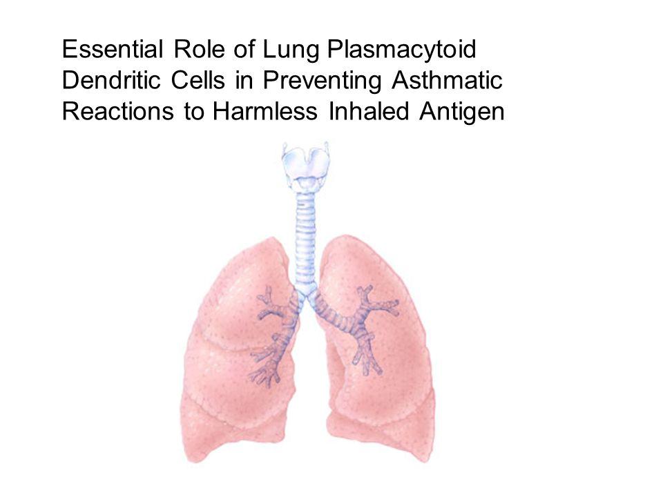 Bij afwezigheid pDC's : sensitisatiekenmerken Th2 cel geassocieerde astma Normaal: eerste blootstelling optreden van tolerantie Depletie mbv anti-Gr1 Ab ook depletie neutrofielen Gebruik van meer specifiek Ab: 120G8 Ab Identieke resultaten