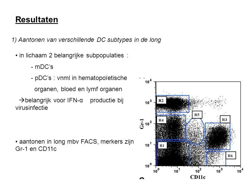 Resultaten 1) Aantonen van verschillende DC subtypes in de long in lichaam 2 belangrijke subpopulaties : - mDC's - pDC's : vnml in hematopoïetische organen, bloed en lymf organen  belangrijk voor IFN-α productie bij virusinfectie aantonen in long mbv FACS, merkers zijn Gr-1 en CD11c