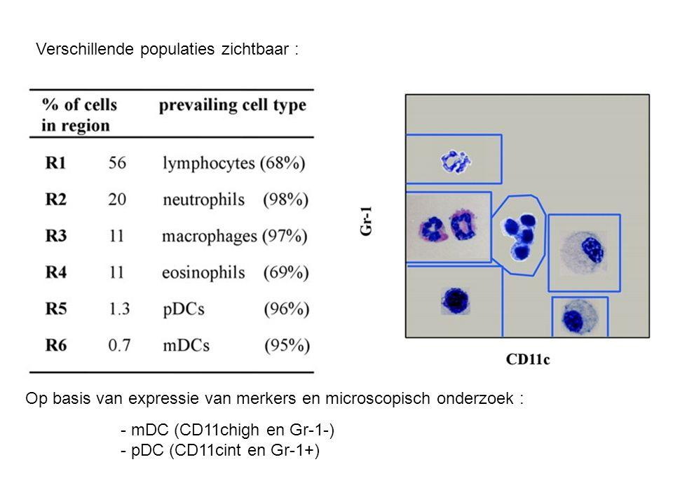 Eigenschappen van deze long pDC's (meer dan 50 %): - B220+ - CD45RB+ - geen expressie van CD8α - immatuur fenotype in vgl met mDC en lagere expressie van co-stim moleculen en MHC II - enkel PD-L1 (co-stim) heeft hogere expressie Bevestigd door confocale microscopie: -blauwe pijltjes : zowel Gr-1 kleuring als B220 kleuring enkel deze populatie kon IFNα produceren bij stimulatie