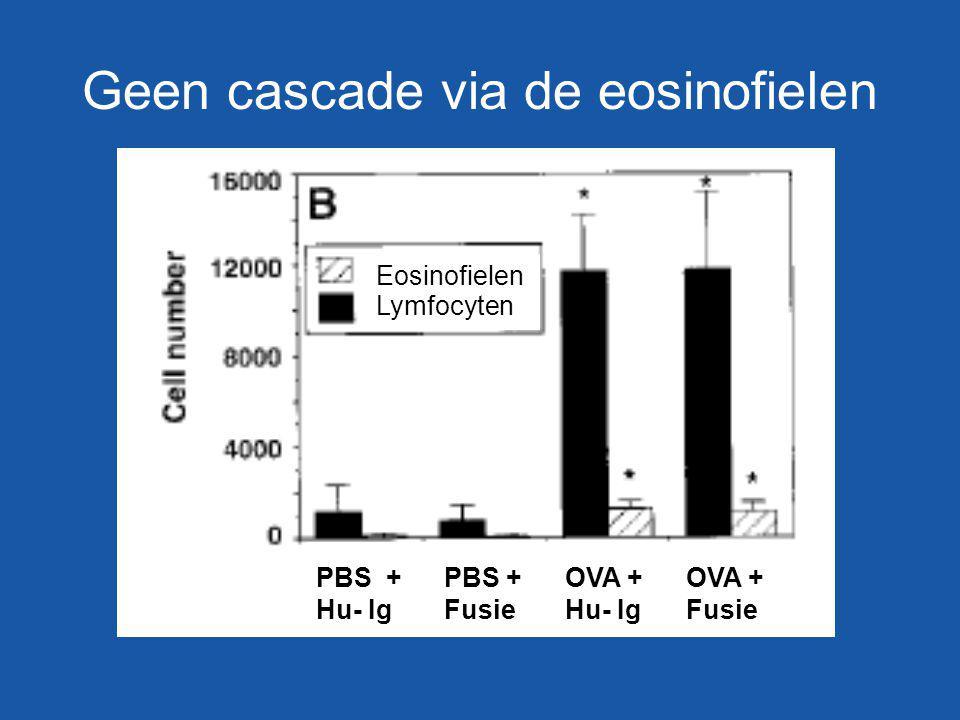 Geen cascade via de eosinofielen PBS + Hu- Ig PBS + Fusie OVA + Hu- Ig OVA + Fusie Eosinofielen Lymfocyten