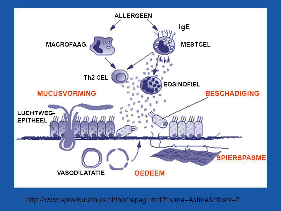 http://www.spreekuurthuis.nl/themapag.html?thema=Astma&hfdstk=2 ALLERGEEN MACROFAAG IgE MESTCEL EOSINOFIEL Th2 CEL MUCUSVORMINGBESCHADIGING VASODILATA