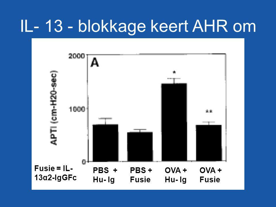Fusie = IL- 13α2-IgGFc IL- 13 - blokkage keert AHR om PBS + Hu- Ig PBS + Fusie OVA + Hu- Ig OVA + Fusie