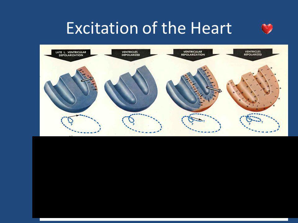 Cardiac Electrical Activity