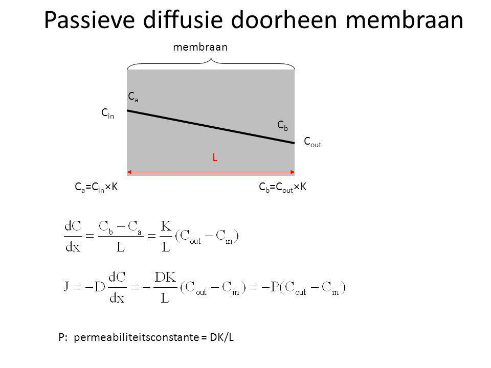 Passieve diffusie doorheen membraan C in C out membraan L P: permeabiliteitsconstante = DK/L C a =C in  K CaCa CbCb C b =C out  K