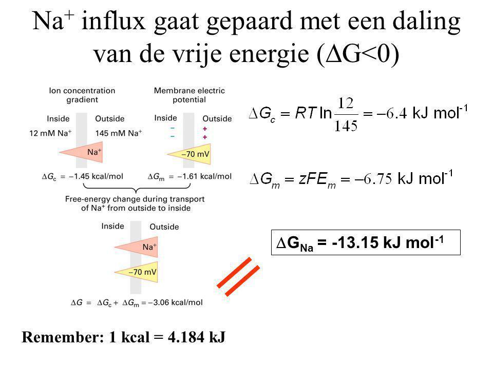 Na + influx gaat gepaard met een daling van de vrije energie (  G<0) Remember: 1 kcal = 4.184 kJ  G Na = -13.15 kJ mol -1
