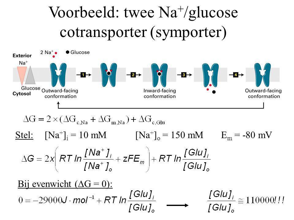 Voorbeeld: twee Na + /glucose cotransporter (symporter) Stel:[Na + ] i = 10 mM [Na + ] o = 150 mME m = -80 mV Bij evenwicht (  G = 0):