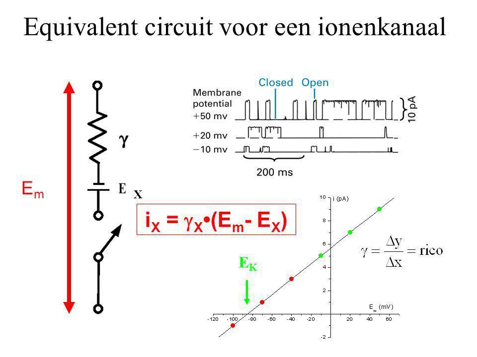 Equivalent circuit voor een ionenkanaal X EmEm EKEK i X =  X (E m - E X )