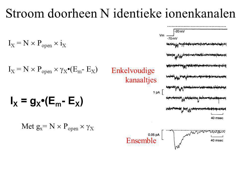 Stroom doorheen N identieke ionenkanalen Enkelvoudige kanaaltjes Ensemble I X = N  P open  i X I X = N  P open   X (E m - E X ) I X = g X (E m -