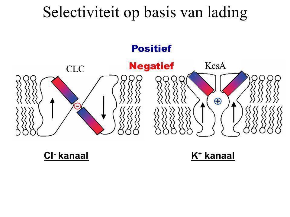 Selectiviteit op basis van lading Cl - kanaalK + kanaal CLC KcsA Positief Negatief