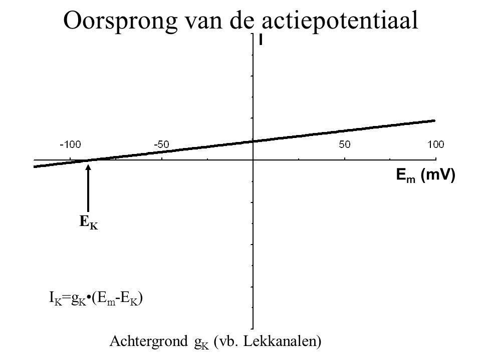 EKEK I K =g K(E m -E K ) Oorsprong van de actiepotentiaal Achtergrond g K (vb. Lekkanalen) I E m (mV)