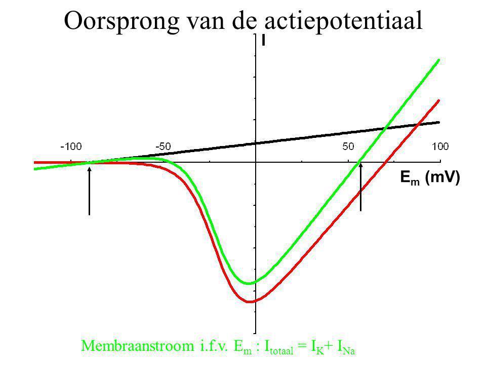 Membraanstroom i.f.v. E m : I totaal = I K + I Na I E m (mV) Oorsprong van de actiepotentiaal