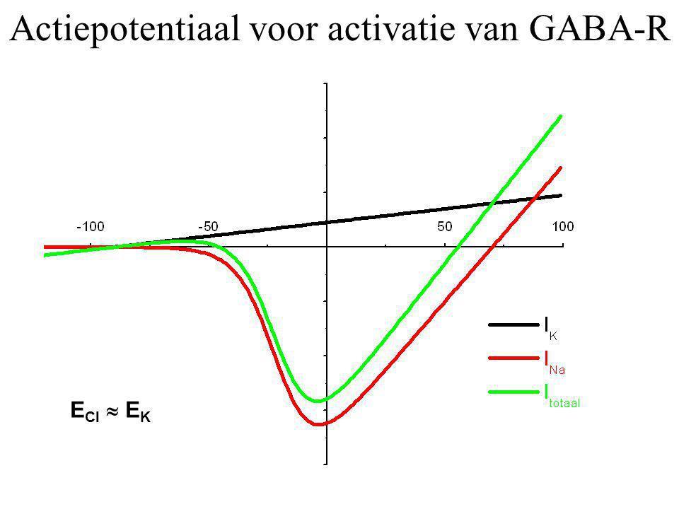 Actiepotentiaal voor activatie van GABA-R E Cl  E K