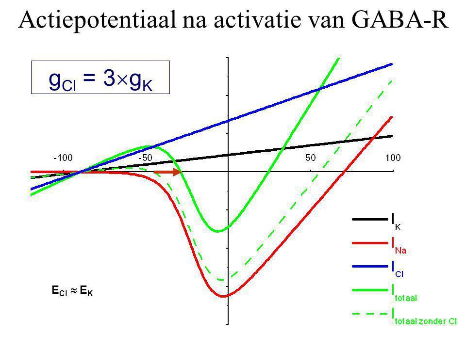 g Cl = 3  g K Actiepotentiaal na activatie van GABA-R E Cl  E K