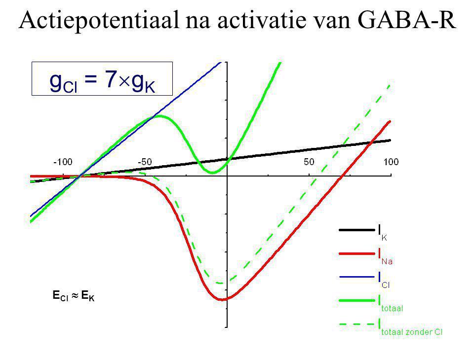 g Cl = 7  g K Actiepotentiaal na activatie van GABA-R E Cl  E K