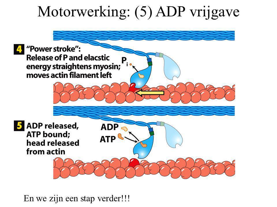 Motorwerking: (5) ADP vrijgave En we zijn een stap verder!!!