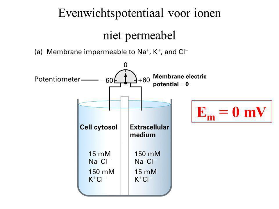 Evenwichtspotentiaal voor ionen niet permeabel E m = 0 mV