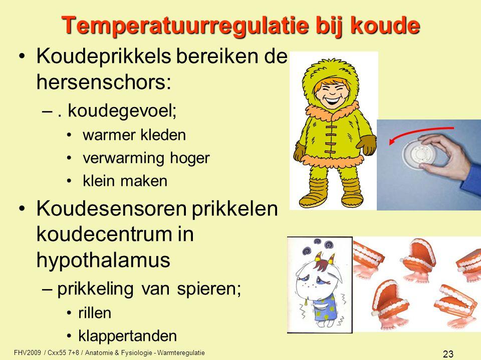 FHV2009 / Cxx55 7+8 / Anatomie & Fysiologie - Warmteregulatie 23 Temperatuurregulatie bij koude Koudeprikkels bereiken de hersenschors: –. koudegevoel