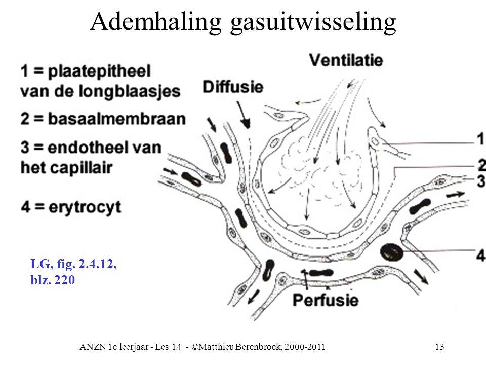 ANZN 1e leerjaar - Les 14 - ©Matthieu Berenbroek, 2000-201113 Ademhaling gasuitwisseling LG, fig. 2.4.12, blz. 220