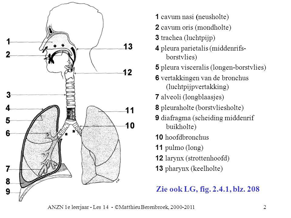 ANZN 1e leerjaar - Les 14 - ©Matthieu Berenbroek, 2000-201123 Relatie longfunctie en circulatie Doel: gasuitwisseling van elke cel Voorwaarden: –Samenstelling lucht => bescherming (neus) –Effectiviteit van de ademhaling –Genoeg beschikbare alveoli –Goed werkend zenuwstelsel voor aansturing en afstemming van ademhaling en bloedsomloop –Goede hartfunctie RV => bloed longen