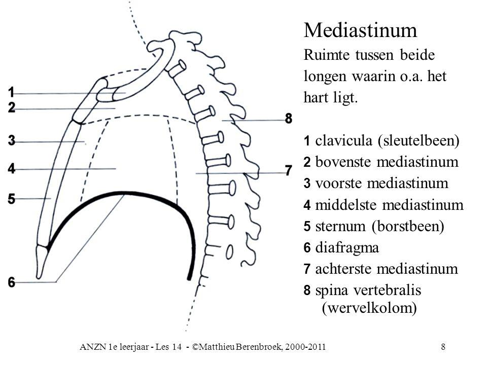 ANZN 1e leerjaar - Les 14 - ©Matthieu Berenbroek, 2000-20118 Mediastinum Ruimte tussen beide longen waarin o.a. het hart ligt. 1 clavicula (sleutelbee
