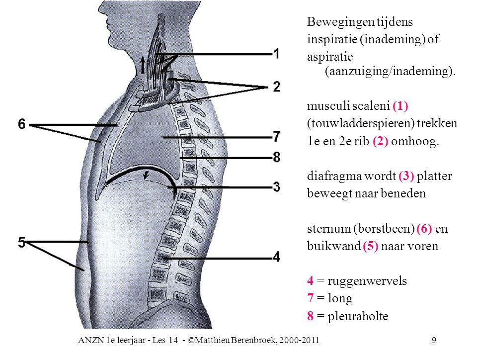 ANZN 1e leerjaar - Les 14 - ©Matthieu Berenbroek, 2000-20119 Bewegingen tijdens inspiratie (inademing) of aspiratie (aanzuiging/inademing). musculi sc