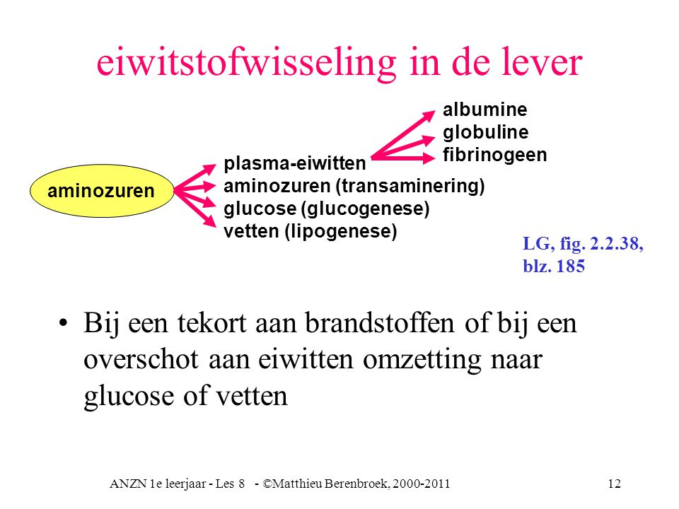ANZN 1e leerjaar - Les 8 - ©Matthieu Berenbroek, 2000-201112 eiwitstofwisseling in de lever Bij een tekort aan brandstoffen of bij een overschot aan eiwitten omzetting naar glucose of vetten plasma-eiwitten aminozuren (transaminering) glucose (glucogenese) vetten (lipogenese) aminozuren albumine globuline fibrinogeen LG, fig.