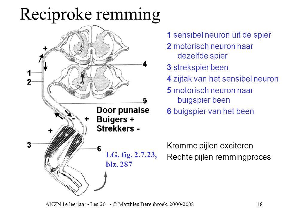 ANZN 1e leerjaar - Les 20 - © Matthieu Berenbroek, 2000-200818 1 sensibel neuron uit de spier 2 motorisch neuron naar dezelfde spier 3 strekspier been 4 zijtak van het sensibel neuron 5 motorisch neuron naar buigspier been 6 buigspier van het been Kromme pijlen exciteren Rechte pijlen remmingproces LG, fig.