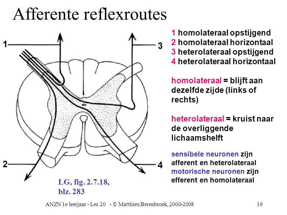 ANZN 1e leerjaar - Les 20 - © Matthieu Berenbroek, 2000-200819 1 homolateraal opstijgend 2 homolateraal horizontaal 3 heterolateraal opstijgend 4 heterolateraal horizontaal homolateraal = blijft aan dezelfde zijde (links of rechts) heterolateraal = kruist naar de overliggende lichaamshelft LG, fig.