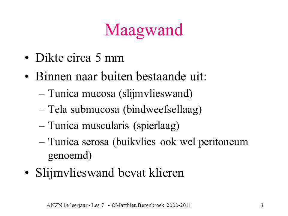 ANZN 1e leerjaar - Les 7 - ©Matthieu Berenbroek, 2000-20113 Maagwand Dikte circa 5 mm Binnen naar buiten bestaande uit: –Tunica mucosa (slijmvlieswand