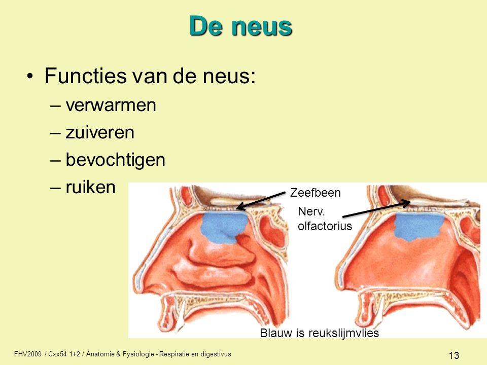 FHV2009 / Cxx54 1+2 / Anatomie & Fysiologie - Respiratie en digestivus 13 De neus Functies van de neus: –verwarmen –zuiveren –bevochtigen –ruiken Blau