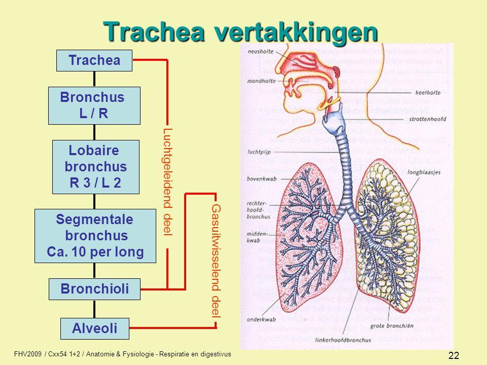 FHV2009 / Cxx54 1+2 / Anatomie & Fysiologie - Respiratie en digestivus 22 Trachea vertakkingen Trachea Bronchus L / R Lobaire bronchus R 3 / L 2 Segme