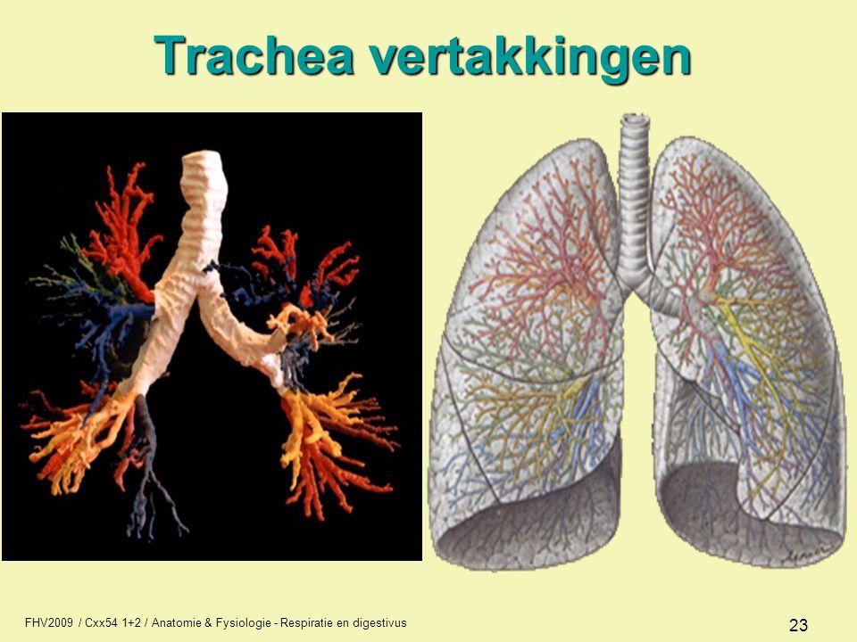 FHV2009 / Cxx54 1+2 / Anatomie & Fysiologie - Respiratie en digestivus 23 Trachea vertakkingen