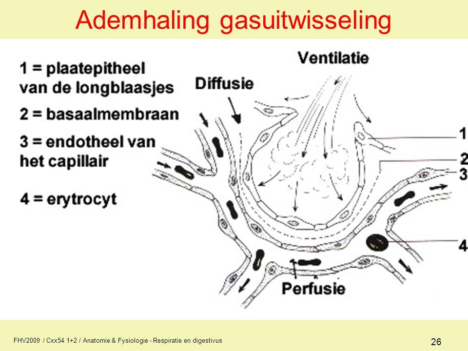 FHV2009 / Cxx54 1+2 / Anatomie & Fysiologie - Respiratie en digestivus 26 Ademhaling gasuitwisseling