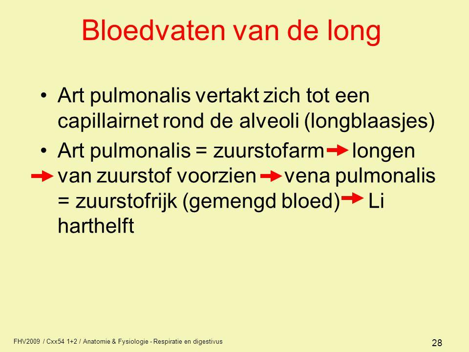 FHV2009 / Cxx54 1+2 / Anatomie & Fysiologie - Respiratie en digestivus 28 Bloedvaten van de long Art pulmonalis vertakt zich tot een capillairnet rond