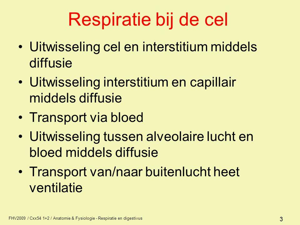 FHV2009 / Cxx54 1+2 / Anatomie & Fysiologie - Respiratie en digestivus 3 Respiratie bij de cel Uitwisseling cel en interstitium middels diffusie Uitwi