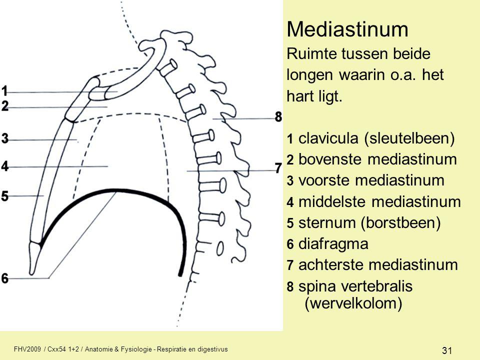 FHV2009 / Cxx54 1+2 / Anatomie & Fysiologie - Respiratie en digestivus 31 Mediastinum Ruimte tussen beide longen waarin o.a. het hart ligt. 1 clavicul