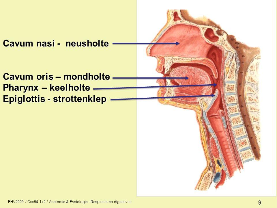 FHV2009 / Cxx54 1+2 / Anatomie & Fysiologie - Respiratie en digestivus 9 Cavum nasi - neusholte Cavum oris – mondholte Pharynx – keelholte Epiglottis