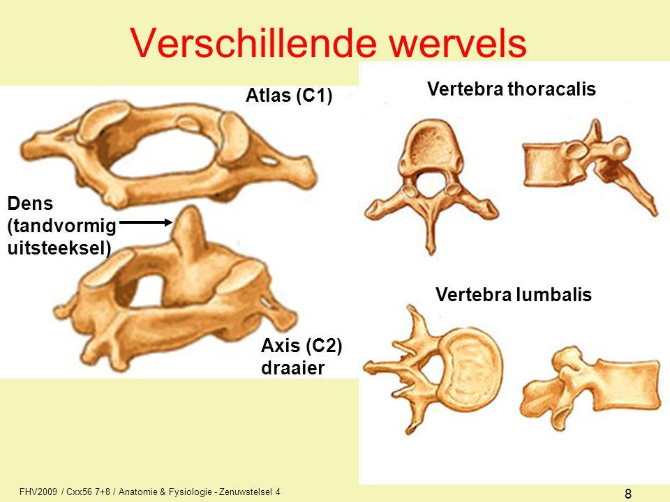 FHV2009 / Cxx56 7+8 / Anatomie & Fysiologie - Zenuwstelsel 4 9 Opbouw wervel processus spinosus (doornuitsteeksel) arcus (wervelboog) processus transversus (dwarsuitsteeksel) foramen vertebra (wervelgat) corpus (wervellichaam) foramen intervertebralis (zenuwdoorgang) discus intervertebralis (tussenwervelschijf) voor beweeglijkheid Nucleus Annulus