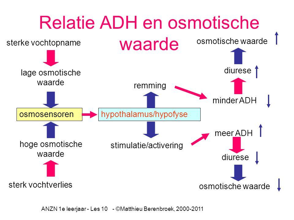 ANZN 1e leerjaar - Les 10 - ©Matthieu Berenbroek, 2000-2011 minder ADH diurese Relatie ADH en osmotische waarde sterke vochtopname sterk vochtverlies