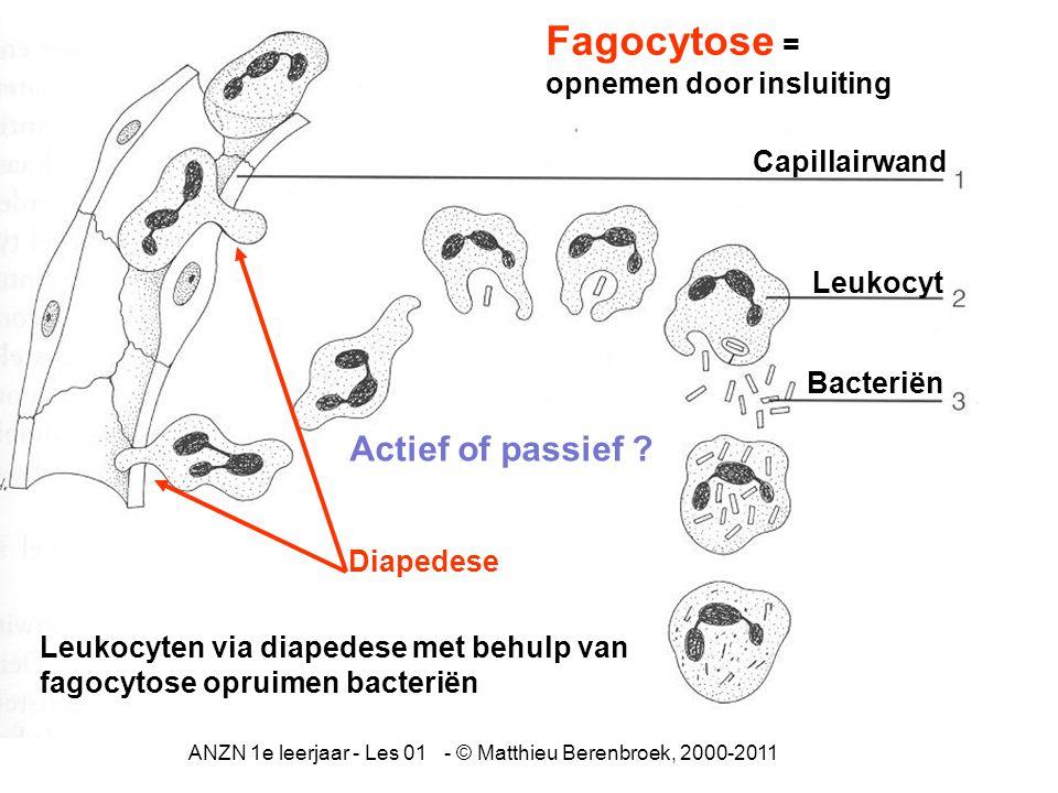 ANZN 1e leerjaar - Les 01 - © Matthieu Berenbroek, 2000-2011 Capillairwand Leukocyt Bacteriën Fagocytose = opnemen door insluiting Leukocyten via diapedese met behulp van fagocytose opruimen bacteriën Diapedese Actief of passief ?