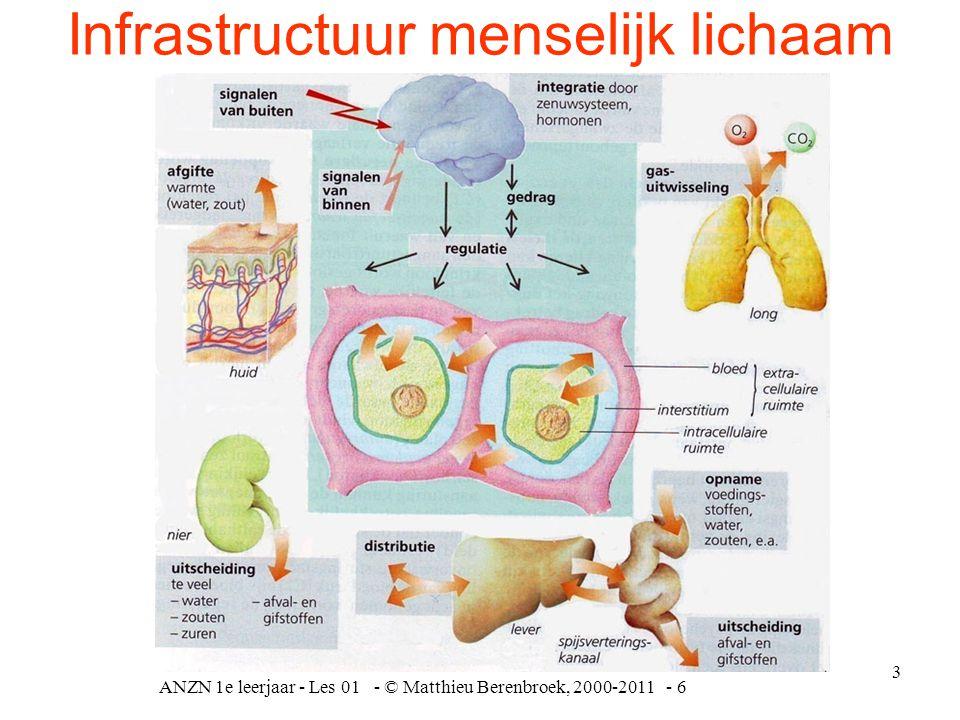 ANZN 1e leerjaar - Les 01 - © Matthieu Berenbroek, 2000-2011 - 6 3 Infrastructuur menselijk lichaam