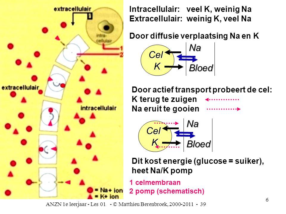ANZN 1e leerjaar - Les 01 - © Matthieu Berenbroek, 2000-2011 - 39 6 Intracellulair: veel K, weinig Na Extracellulair:weinig K, veel Na Door diffusie verplaatsing Na en K Dit kost energie (glucose = suiker), heet Na/K pomp Door actief transport probeert de cel: K terug te zuigen Na eruit te gooien 1 celmembraan 2 pomp (schematisch) Cel KNaBloed Cel KNaBloed