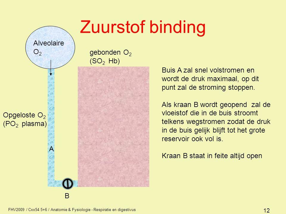 FHV2009 / Cxx54 5+6 / Anatomie & Fysiologie - Respiratie en digestivus 12 Zuurstof binding Opgeloste O 2 (PO 2 plasma) gebonden O 2 (SO 2 Hb) A Buis A