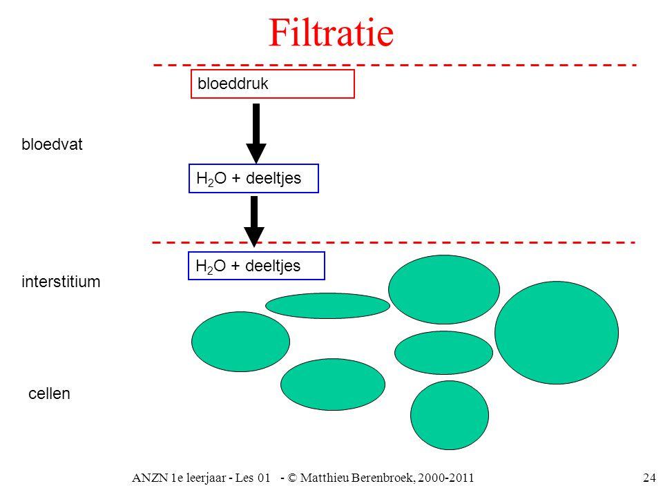 ANZN 1e leerjaar - Les 01 - © Matthieu Berenbroek, 2000-201124 Filtratie bloedvat interstitium cellen H 2 O + deeltjes bloeddruk H 2 O + deeltjes