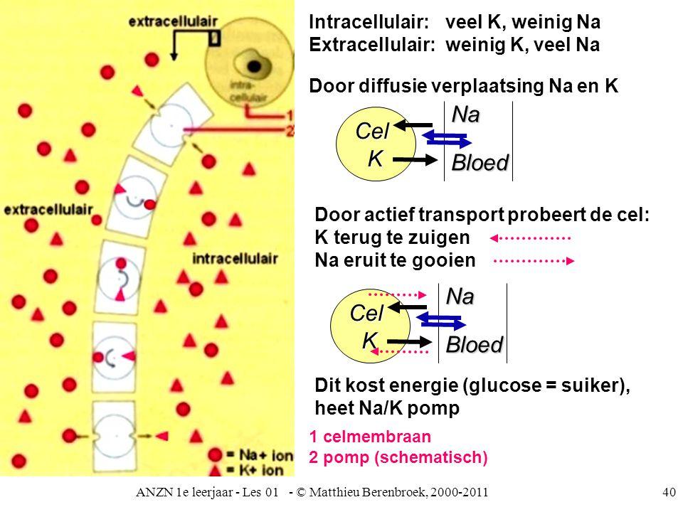ANZN 1e leerjaar - Les 01 - © Matthieu Berenbroek, 2000-201140 Intracellulair: veel K, weinig Na Extracellulair:weinig K, veel Na Door diffusie verpla