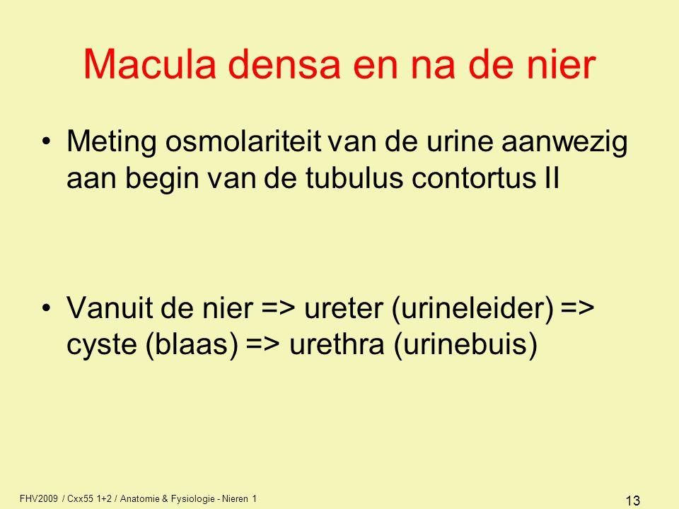 FHV2009 / Cxx55 1+2 / Anatomie & Fysiologie - Nieren 1 13 Macula densa en na de nier Meting osmolariteit van de urine aanwezig aan begin van de tubulu