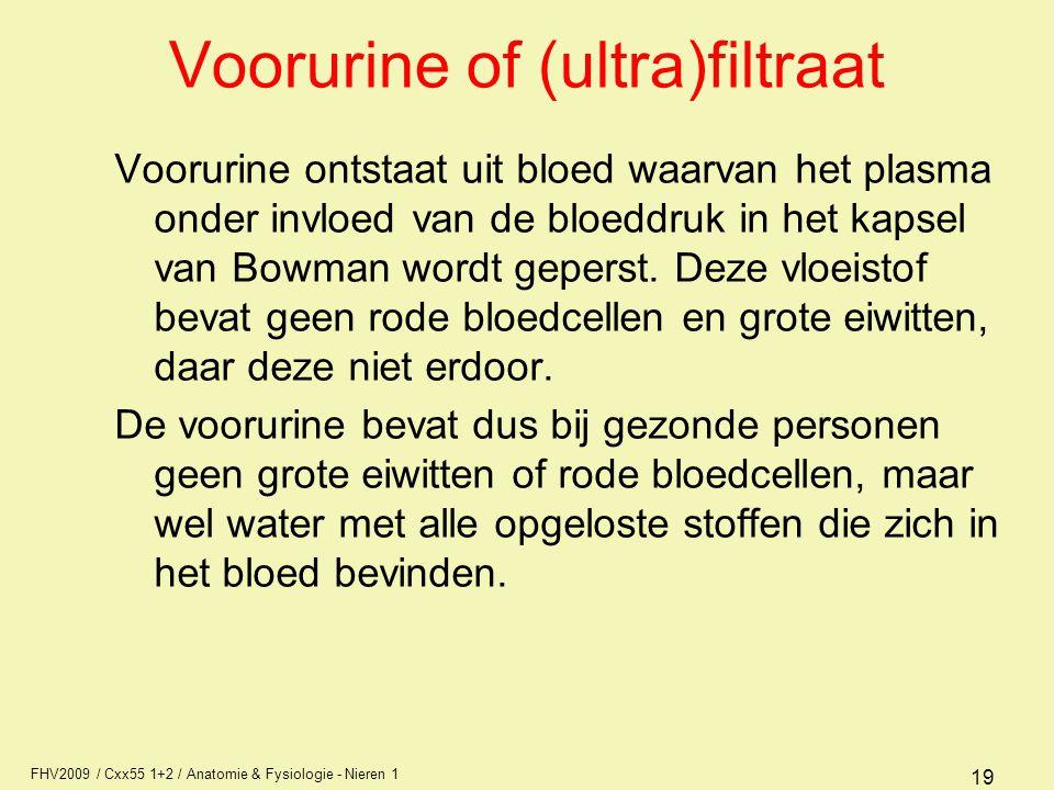 FHV2009 / Cxx55 1+2 / Anatomie & Fysiologie - Nieren 1 19 Voorurine of (ultra)filtraat Voorurine ontstaat uit bloed waarvan het plasma onder invloed v