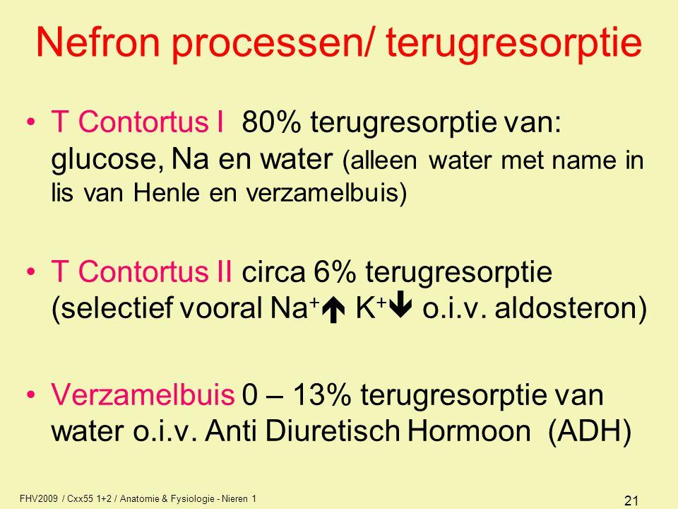 FHV2009 / Cxx55 1+2 / Anatomie & Fysiologie - Nieren 1 21 Nefron processen/ terugresorptie T Contortus I 80% terugresorptie van: glucose, Na en water