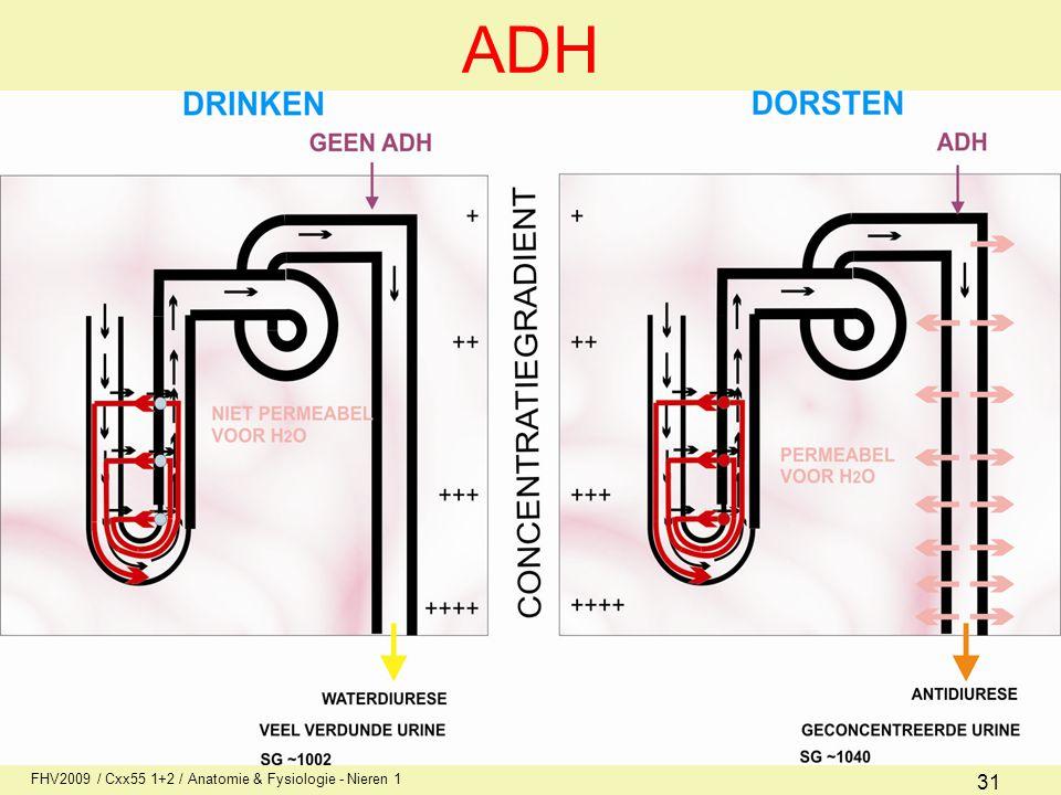 FHV2009 / Cxx55 1+2 / Anatomie & Fysiologie - Nieren 1 31 ADH